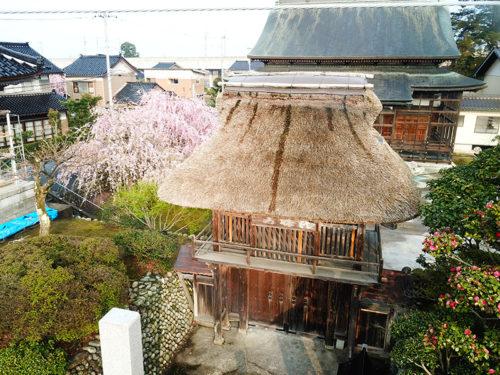 長安寺の桜